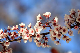 Profitez des énergies du printemps